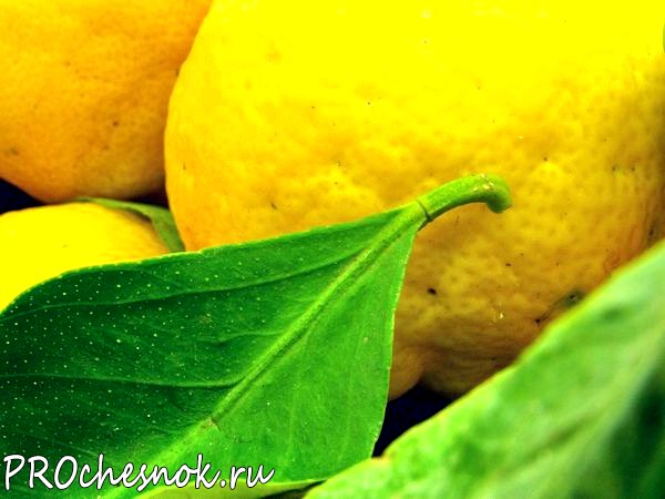 Фото - Чеснок, лимон, мед - польза