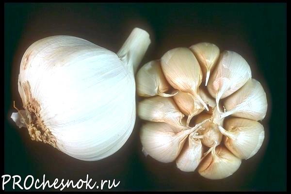 Фото - Когда сажать чеснок под зиму