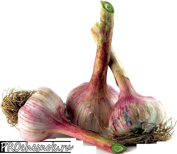 Фото - Маринованный головками чеснок